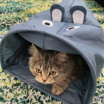 猫好きさん要チェック!「フライングタイガー猫のおもちゃ」2018年の新作