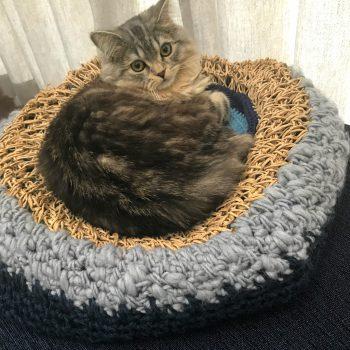 オシャレな北欧雑貨ソストレーネグレーネのカラフル毛糸で猫のベットをDIY♩
