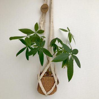 猫がいても安心。観葉植物を吊して飾る人気のプラントハンガー